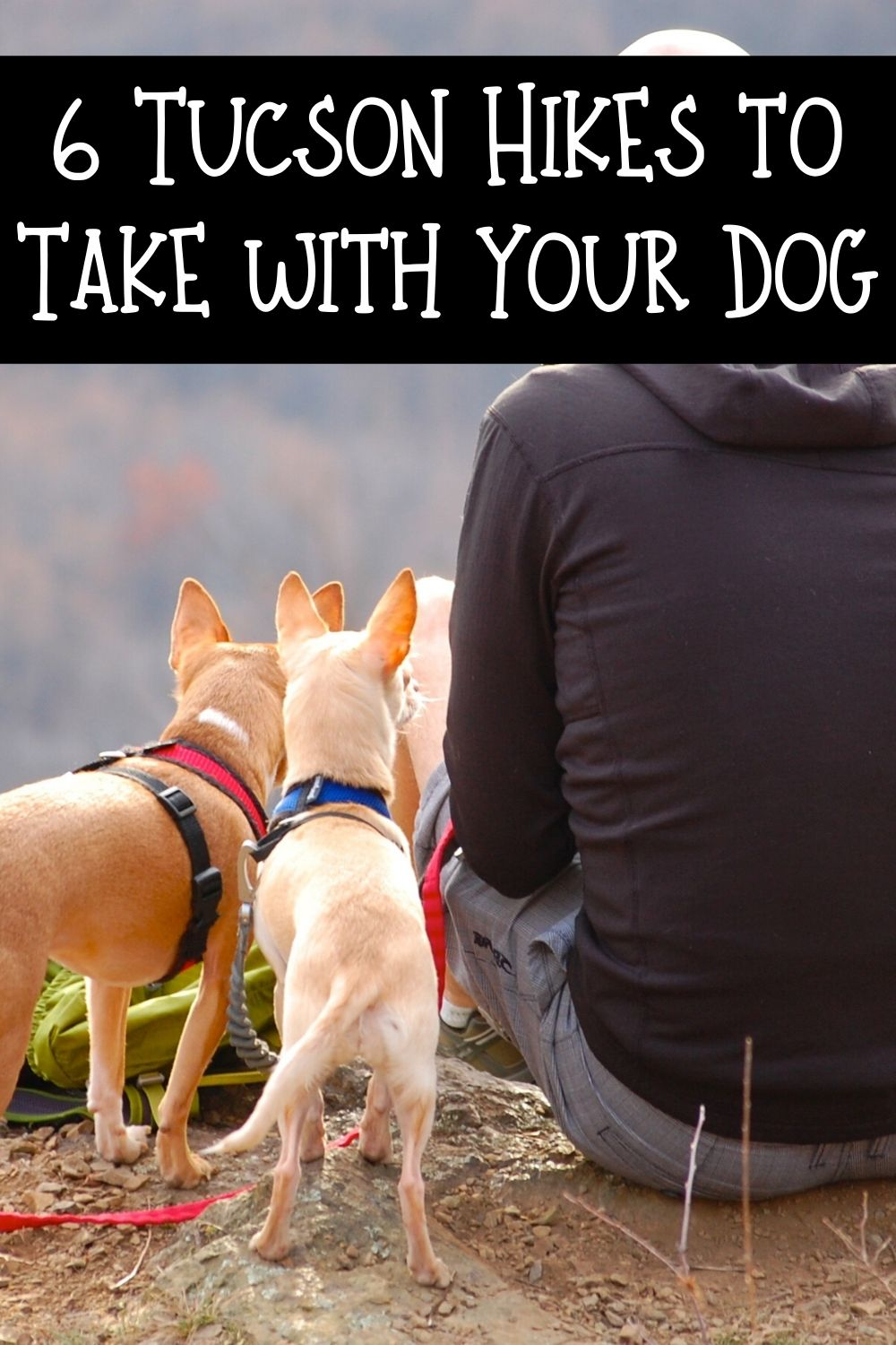 Looking for some dog friendly Tucson hikes? We've got you covered. Here are some excellent choices for your pet friendly Tucson hikes. These 6 hikes in Tucson that you can enjoy with your dog will help you get active and enjoy the many benefits of Tucson living!